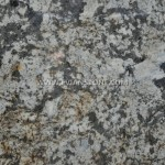 Granite Counter or Vanity Top Golden Persa