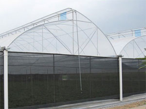 Fixed Roof Multi-Span Greenhouse