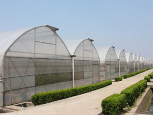Greenhouse with Cooling System