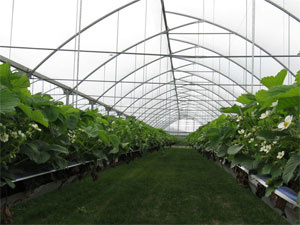 Greenhouse Suitable for Vegetables and Flowers